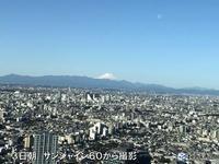 【そんなに風が強かったんだ】東横線不通 - お散歩アルバム・・夏日和バラ日和