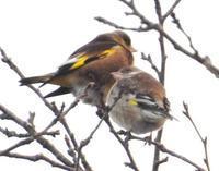 鳥のなる木 - 虫のひとりごと