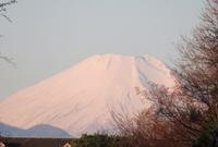 朝散歩今朝の富士山お月さまクリスマスローズのお花 - 風の彩