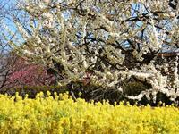 宇治市植物公園へ - 写真で綴る日々