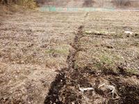雪解け、新しい種 - 北国の田舎暮らし