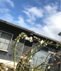 なたね梅雨 - 自然を見つめて自分と向き合う心の花