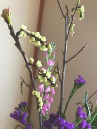 木五倍子(きぶし) - 自然を見つめて自分と向き合う心の花