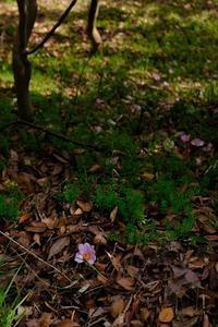 椿の森 - くろやぎと花子