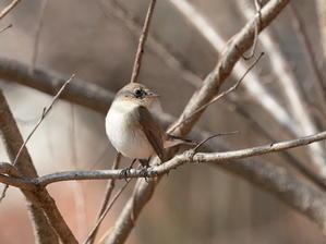 今日の撮って出し!気になったので!行って来ました。MCK - シエロの野鳥観察記録