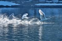 みちのく白鳥たち32 - みちのくの大自然