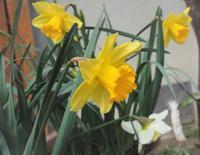春の花が咲き始めました - ローザのアトリエ便り