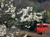 桃太郎線にも春が - ゆる鉄DEイコー!