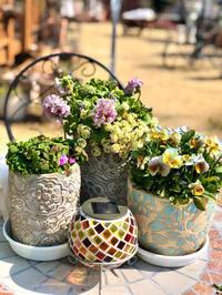 バラの芽かき♫と北関東より寒い我が家(T . T) - 薪割りマコのバラの庭