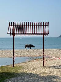 何から書こう - 香港ランタオ島から