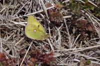 新レンズで新生蝶を - 蝶と蜻蛉の撮影日記