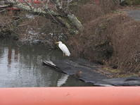 3月4日(木)上野池のツーショット - 庄原市上野公園(上野池)とその周辺の出来事