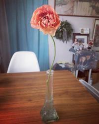 花めぐり - 花の窓