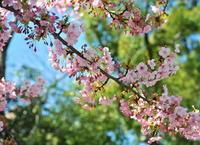 もうすぐ春ですね - ぎゃらりー竹斎堂