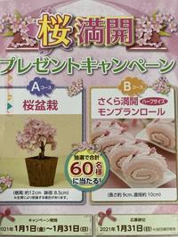 桜満開プレゼントキャンペーン - funkyroom