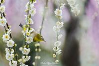 ウメジロー - Digital Photo Diary