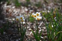 春を探しに~三毳山へ - 季節の風を追いかけて