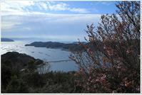 陽光ザクラが咲きました! - ハチミツの海を渡る風の音