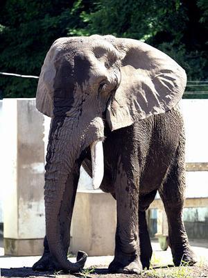懐かしの動物たち(18) だいすけ - 動物園放浪記