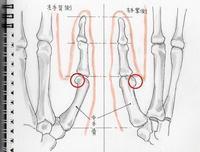 弓の稽古弓手と手の内の考察其の七左手骨格 - ブリキの箱