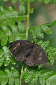 思い出の1枚の写真・・・オナガシジミ - 続・蝶と自然の物語