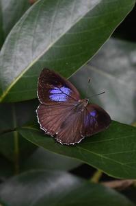 思い出の1枚の写真・・・キリシマミドリシジミ - 続・蝶と自然の物語