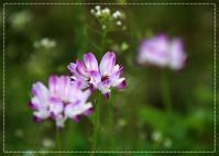 春です!レンゲソウ咲く散歩道 - 気ままにデジカメ散歩