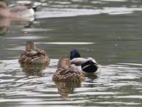 浮間公園~サンクチュアリにて3/6 - 青い鳥を探して