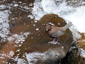 今日の撮って出し! 始まったようです! HNK - シエロの野鳥観察記録