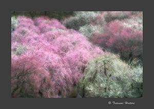 Photo.Color