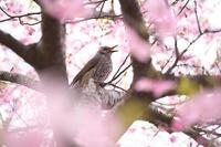 春に唄う - 節操のない写真館