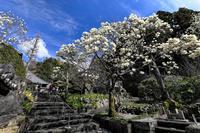 白く染まる境内「十輪寺」 - やきとりブログ
