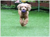 ボールに一点集中!!な顔 - さくらおばちゃんの趣味悠遊