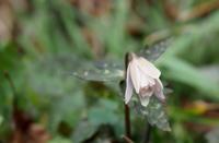 啓蟄蟄虫啓戸(すごもりのむしとをひらく) - 紀州里山の蝶たち