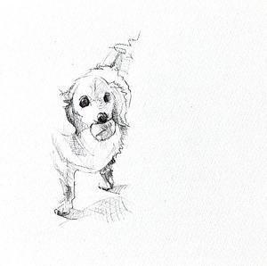 < Eyes of a Dog >
