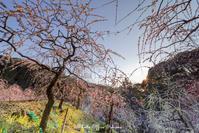 梅園も終盤 - Digital Photo Diary