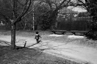 春が来ている。20210309 - Yoshi-A の写真の楽しみ
