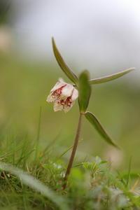 この花の魅力 - ecocoro日和