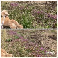 花粉症と春の訪れ - ひとり言