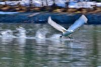 みちのく白鳥たち35 - みちのくの大自然