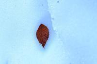 秋冷凍保存 - 心のままに