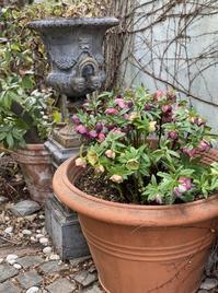 ガーデン&クラフツのクリスマスローズ - 小さな庭 2