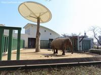 2021年2月王子動物園その4みゆきさんオヤツタイム - ハープの徒然草