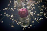 花 - IN MY LIFE Photograph