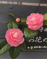 3月11日 - 自然を見つめて自分と向き合う心の花
