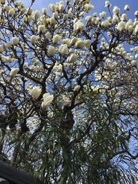 『春の・・予感・・(これといったネタなくお茶を濁す)』 - NabeQuest(nabe探求)