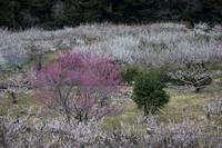 この広い野原いっぱい - 感動模写Ⅲ