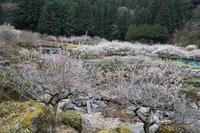梅の渓谷 - 感動模写Ⅲ