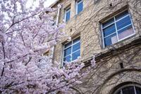 「京都の春を先撮り桜とモクレン」 - ほぼ京都人の密やかな眺め Excite Blog版
