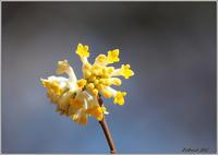 季節の花いろいろ - 野鳥の素顔 <野鳥と日々の出来事>